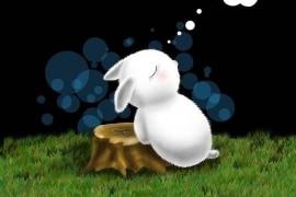 爱做梦的兔子