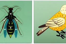 小鸟和苍蝇