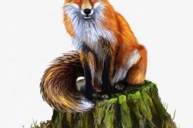 狐狸的影子