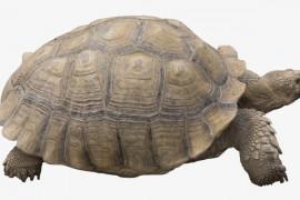 老海龟的流行时装