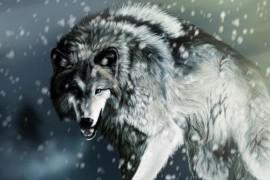 和笼子里的狼拍照