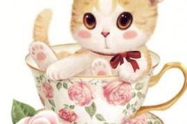 小猫的杯子