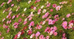 山坡上的花