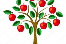 丫形苹果树