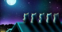 在月亮上住过的小猫