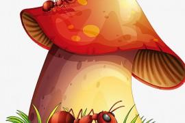 小蚂蚁的蘑菇伞