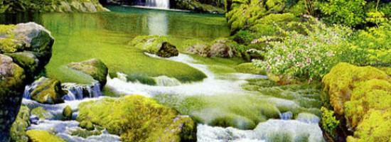 小溪和白杨树