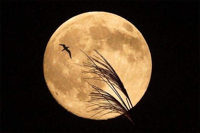 月之旅 童话故事