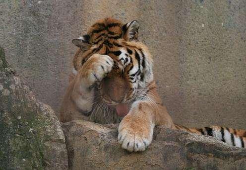难以捉摸的老虎 睡前故事